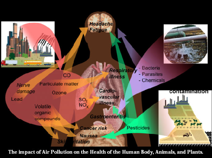 The impact of Air Pollution on the Health of the Human ...Air Pollution Effects On Animals And Plants