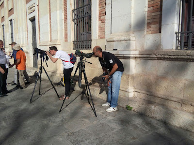 Observación de aves Cernícalos Primilla Catedral de Sevilla, 6 de Junio 2017. Grupo local SEO-Sevilla.