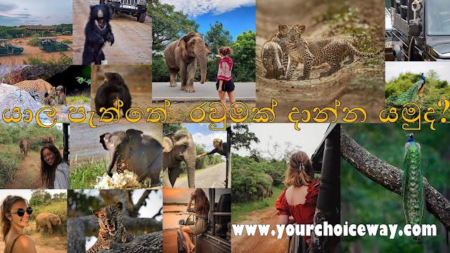 යාල පැත්තේ රවුමක් දාන්න යමුද 🐅🐆🐃🦚🐘🦌 (Yala National Park) - Your Choice way - Your Choice Way
