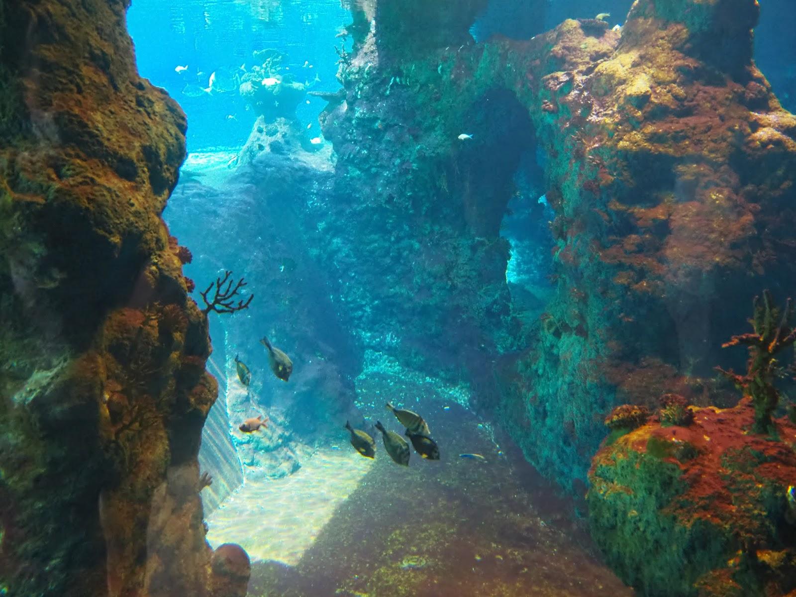Tunel z rekinami