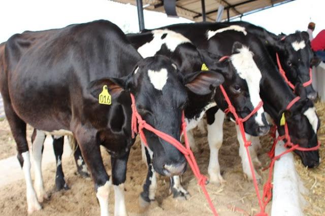 Em Batalha/AL, 37ª Expobacia Leiteira vai reunir mais de mil animais durante evento