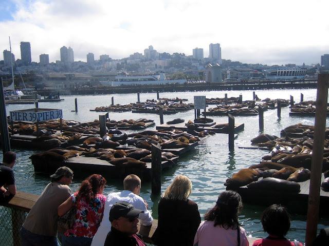 San Francisco - Muelle 39 - Pier 39 - Leones marinos - Sea lion