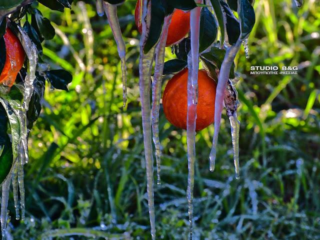 Εκτεταμένος παγετός στην Αργολίδα