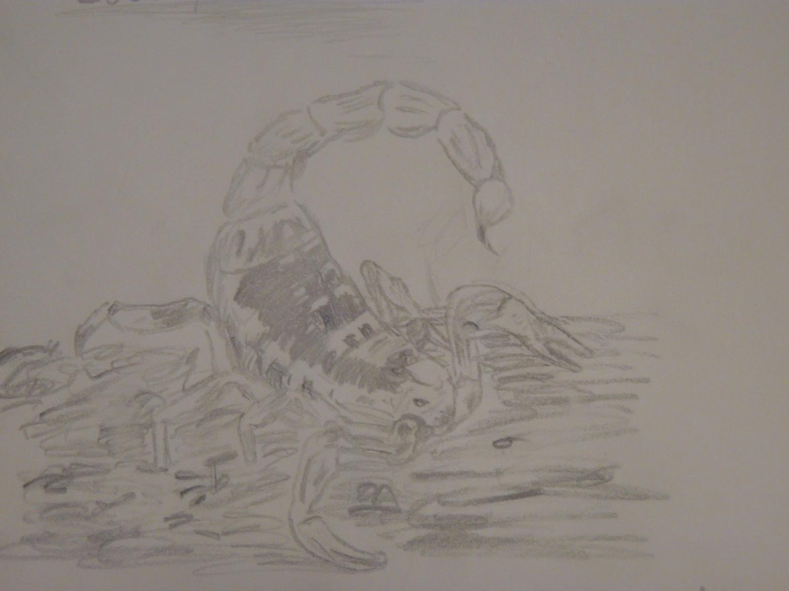 Dibujo De Un Escorpion Dorado a través del arte: escorpión dorado