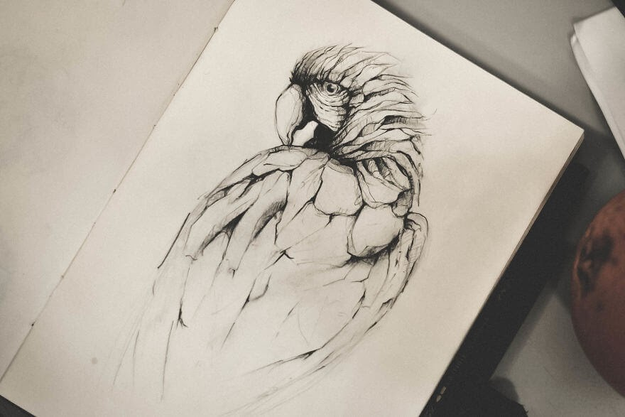 09-The-Parrot-Mike-Koubou-Stylized-Sketchbook-Animal-Pencil-Drawings-www-designstack-co