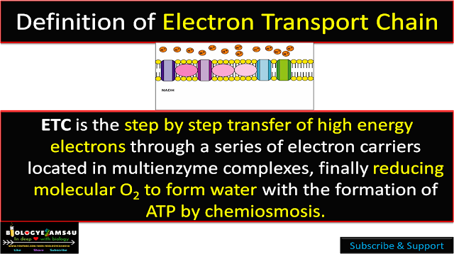 Electron Transport Chain Definition
