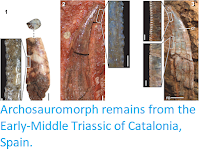 http://sciencythoughts.blogspot.co.uk/2018/03/archosauromorph-remains-from-early.html