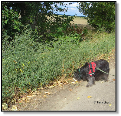 Nasenarbeit beim Hund