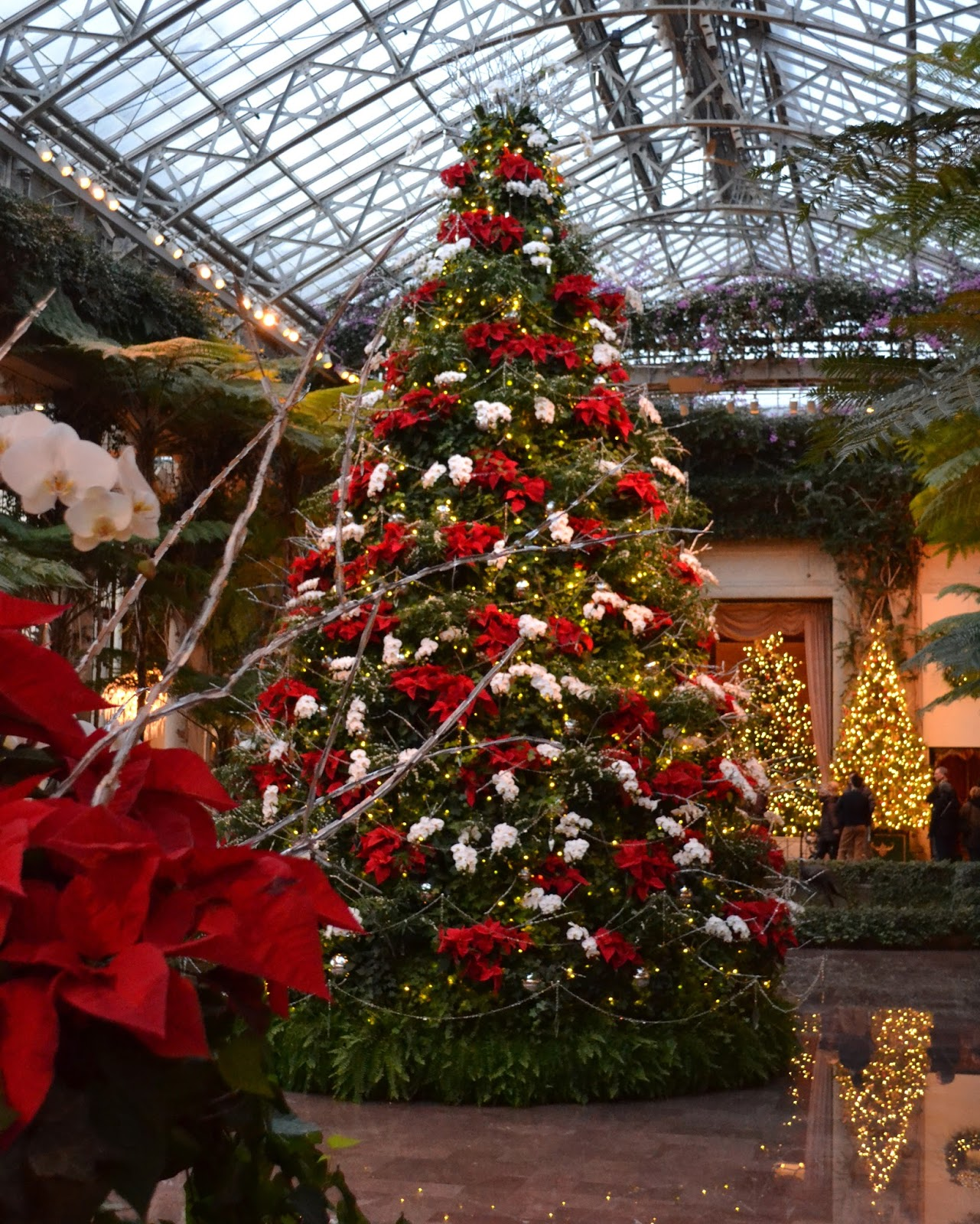 My Paisley World A Stunning Christmas At Longwood Gardens
