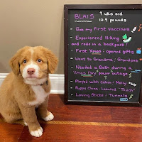 puppy_training_recipes