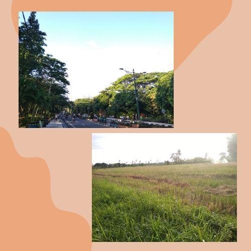 Kesejukan karena pepohonan di taman