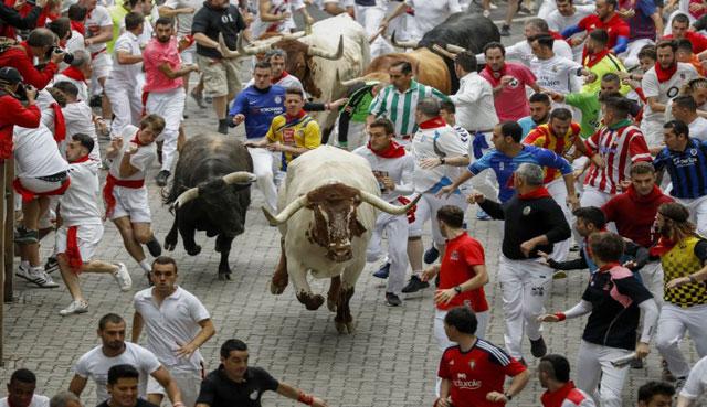 Lari Banteng Pamplona