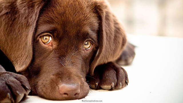 Esto es lo que sienten los perro antes de morir. Es conmovedor