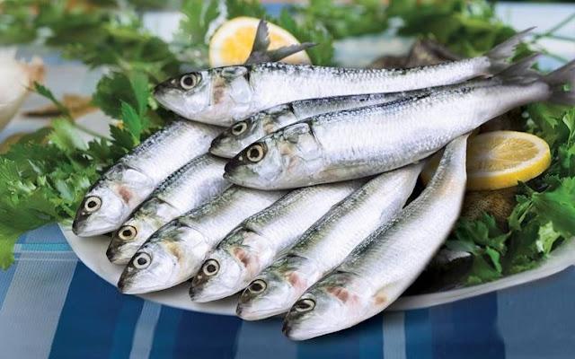 Harga Jual Beli Ikan Sarden Konsumsi di Yogyakarta Terpercaya