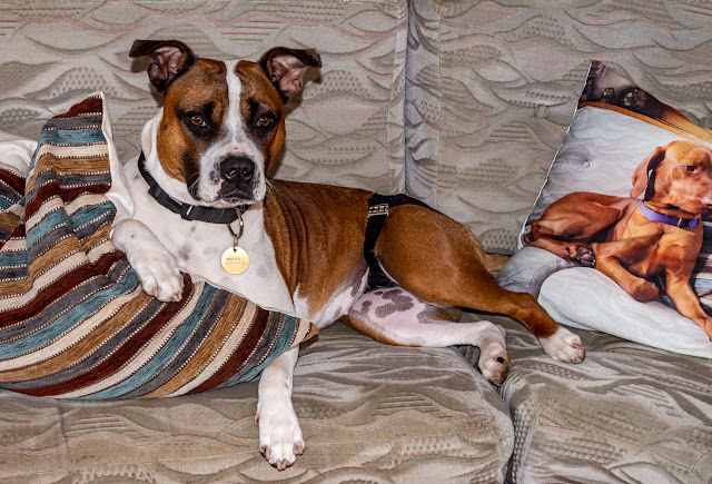Phot of Ruby lounging on the couch in the saloon on Ravensdale