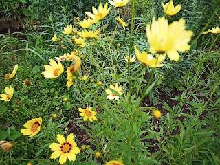 目黒川緑道の花