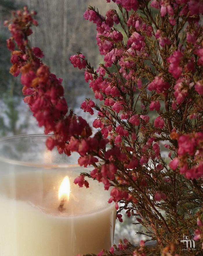 kynttilänliekki ja kanerva