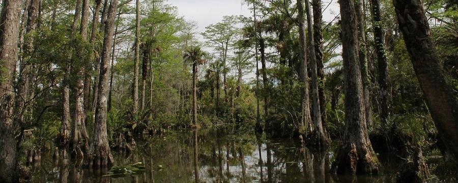 Paisajes entre los pantanos