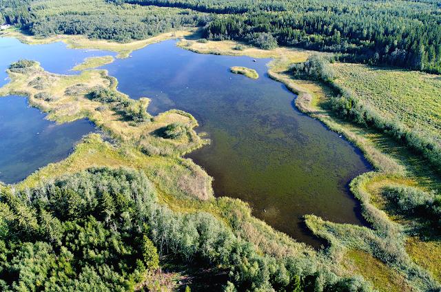 Ilmakuva fladasta, joka on tiheän vesikasvillisuuden ympäröimä ja mereen vain kapean suun kautta yhteydessä.