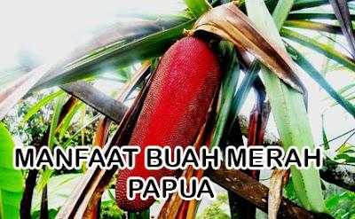 Manfaat buah merah papua untuk kesehatan
