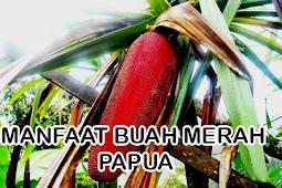 7 Manfaat buah merah papua untuk kesehatan