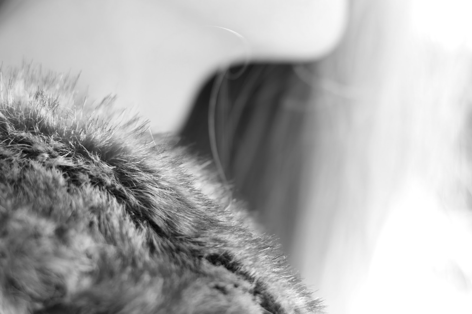 Close up black and white photography fur collar