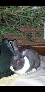 Xmas tree clyde rabbit