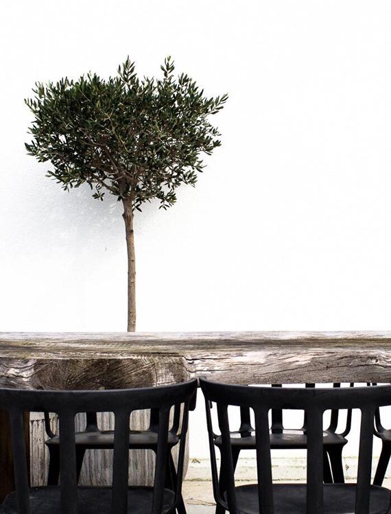 Olive tree | Daniella Witte
