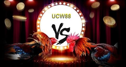 Giới thiệu trường gà UCW88