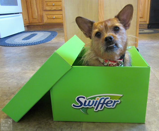 Mini Review: Swiffer Products