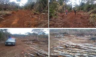 Cippa investiga desmatamento ilegal