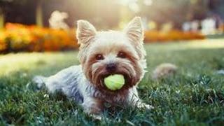 Захистіть ваші чотири ноги членів сім'ї з твариною медичне страхування