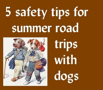5 safety tips for summer road trips with dogs