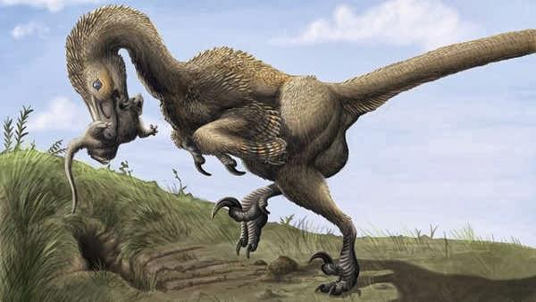 Dinosaurus Acheroraptor Temertyorum, Saurornitholestes