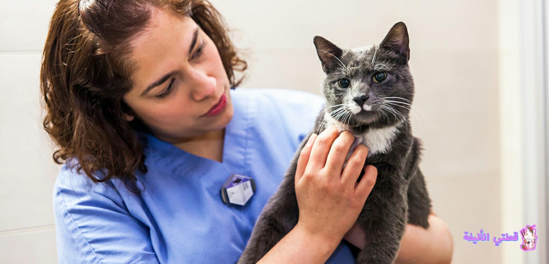 أمراض القطط الشائعة السرطان في القطط