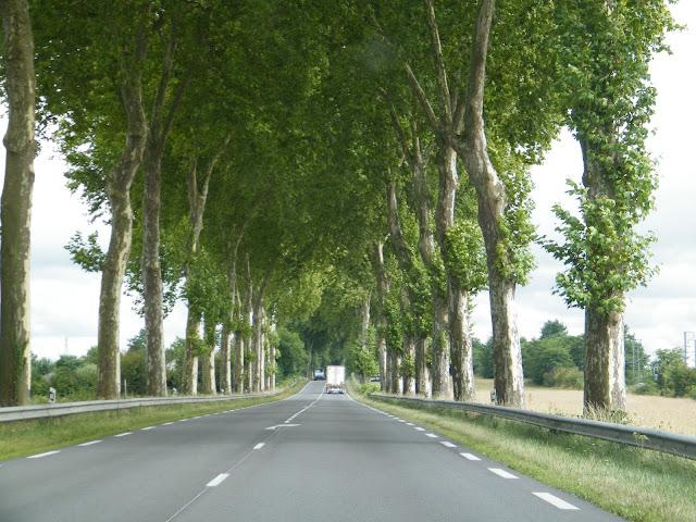 Langs de Route National 7 naar Zuid-Frankrijk, omzoomd met platanen | (c) Koen Goossens