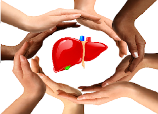 Pentingnya Organ Hati Bagi Tubuh Kita