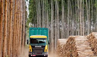 vender madera en galicia