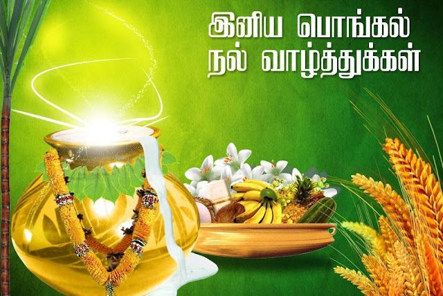 pongal wishes,pongal wishes in tamil,pongal wishes images,happy pongal wishes,pongal wishes images in tamil