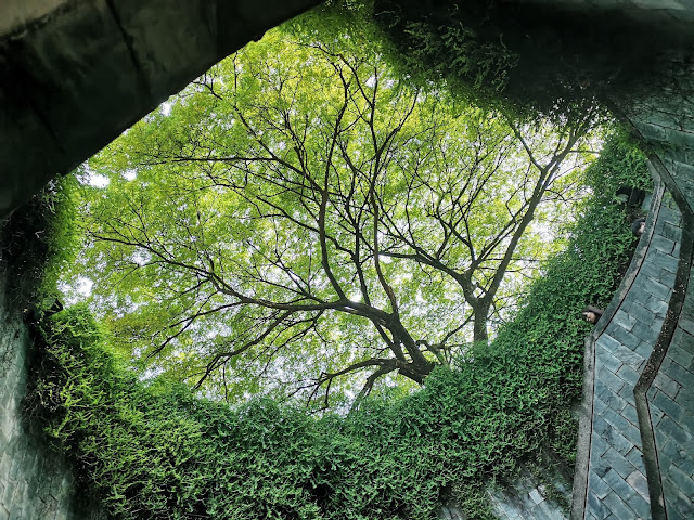 Tree Tunnel - Fort Canning Park