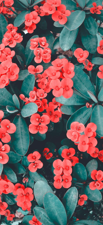 خلفية مجموعة زهور حمراء صغيرة
