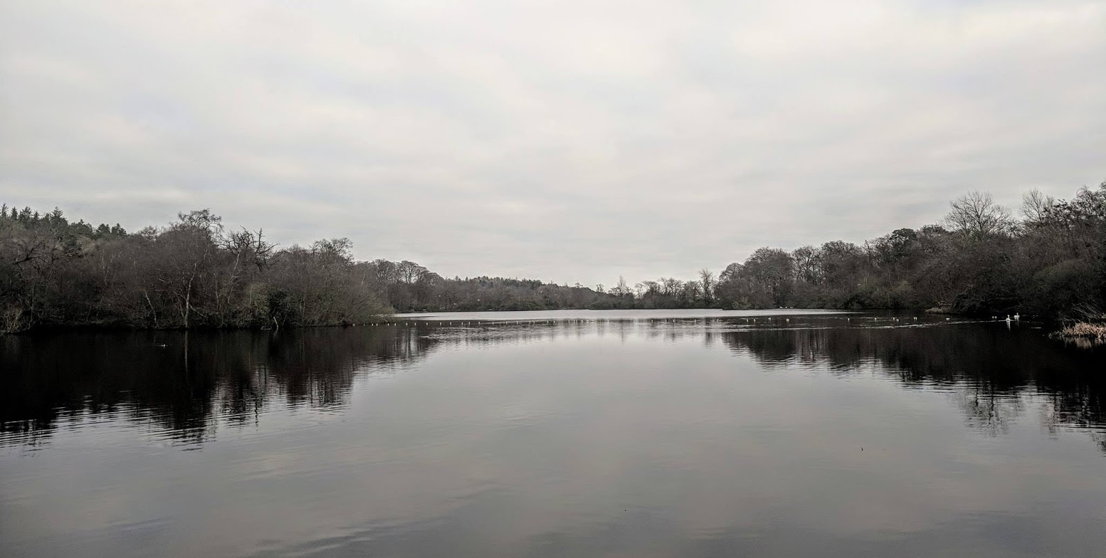 A Guide to Visiting Bolam Lake, Northumberland  - lake in winter