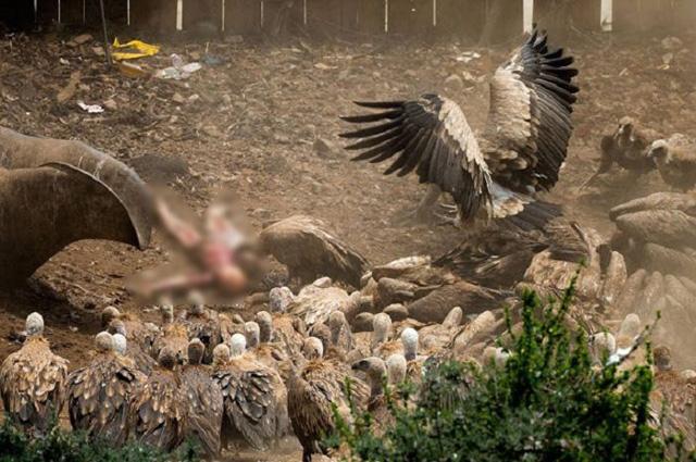 Foto warga Sudan sekarat ditunggui burung pemakan bangkai
