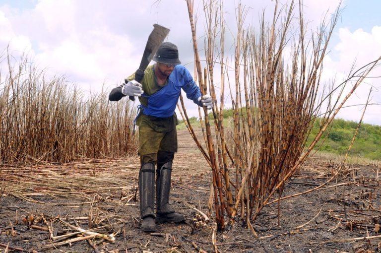 Governo paga 4ª parcela do Mão Amiga a trabalhadores rurais do corte da cana