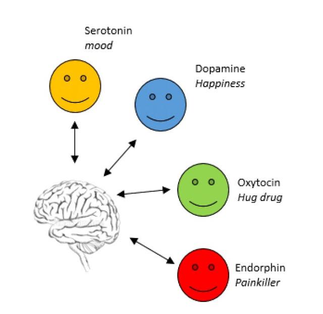 The hormone serotonin happiness