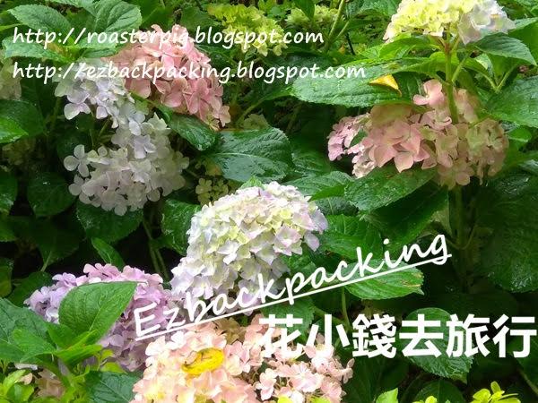 沙田中央公園繡球花