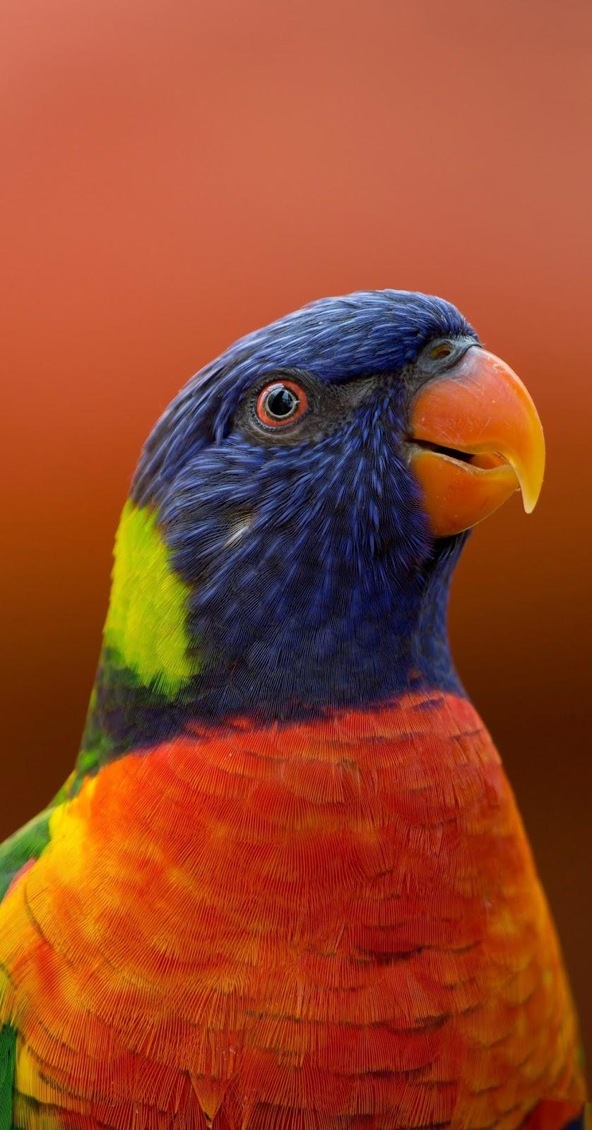 A dazzling rainbow lorikeet.