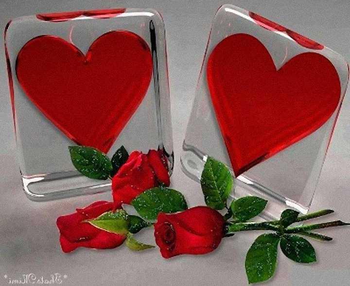 Imagenes De Flores Rosas Rojas Bloggergifs