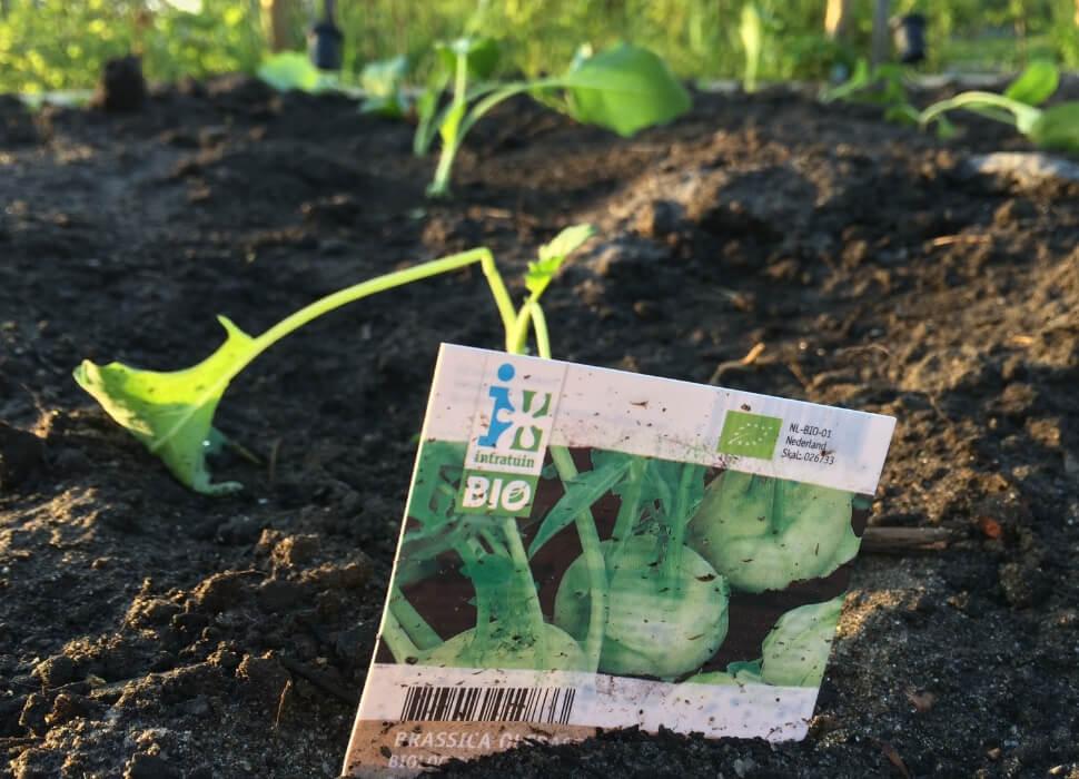 Aardbeien Planten Kopen Intratuin.Moestuin Maandag De Moestuin Is Aangelegd Zuinigeman