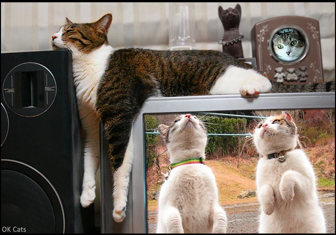 Photoshopped Cat picture • Cats rule the World! They are in our homes, anywhere and...everywhere! [ok-cats-site.com]